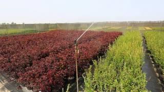 видео питомник растений