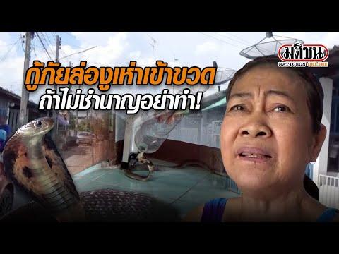 กู้ภัยล่องูเห่าเข้าขวด ถ้าไม่ชำนาญอย่าทำ! : Matichon Online