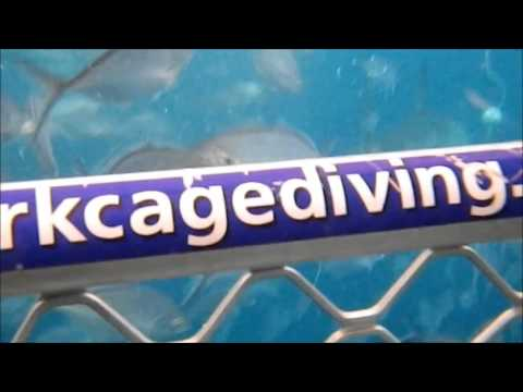 Cage Diving with Great White Sharks in Port Lincoln