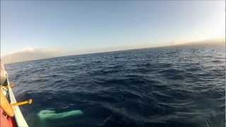 Humpback whale gives our canoe a love ta...