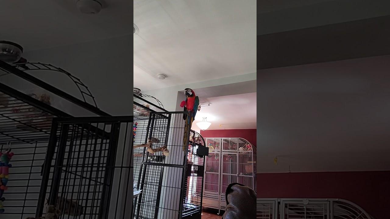 Red Update #1