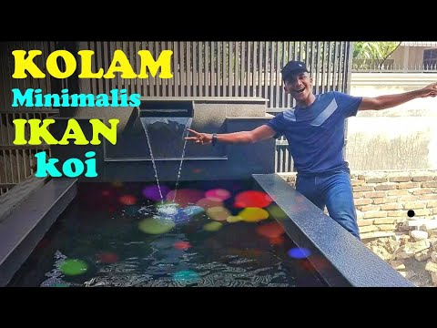 kolam minimalis ikan koi _ depan rumah - youtube