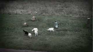 козы и кошка
