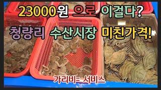 청량리 #경동시장 탐방기 23000원 으로 뿔소라 가리…