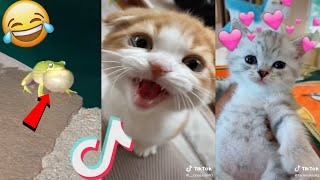 June 2020 funny cute tiktok animals compilation(Pt.10)