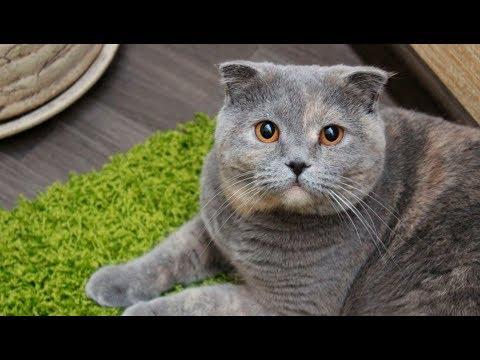 1 час лечебного кошачьего мурлыканья. 🐱 Успокаивает нервную систему