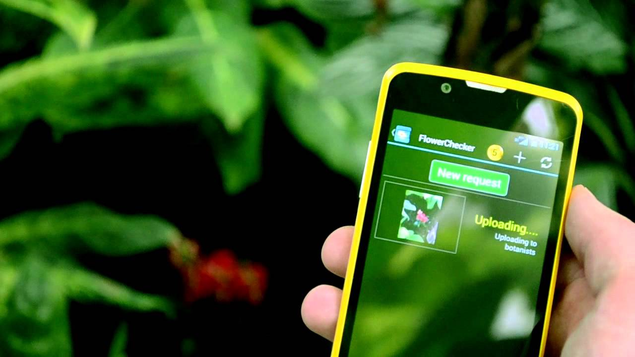10 best plant apps and flower identification apps for