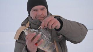 Зимняя рыбалка  Окуни   горбачи Дусай   Кичу  Февраль 2016 г