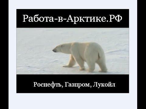 Роснефть работа в Арктике