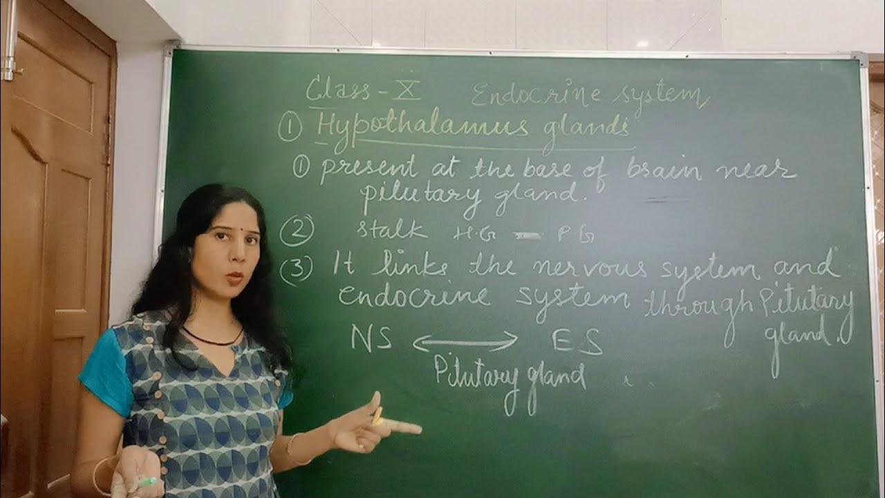 Endocrine glands class 10 ncert - YouTube
