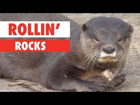Rollin Rocks