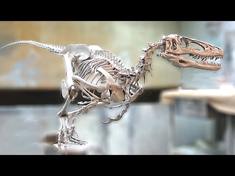 5 Amazing Facts About The Deinonychus