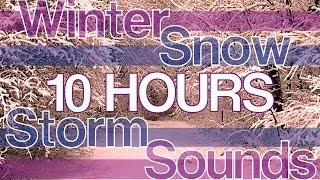 10 HOURS Winter Snowstorm Sounds
