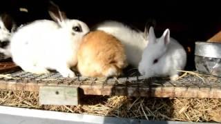 клетка для молодняка кроликов просто и легко сделать самому