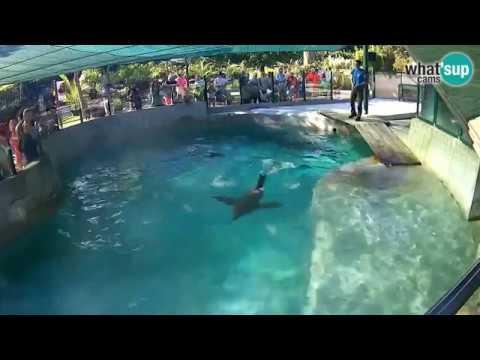 Zoo Zagreb Hranjenje Morskih Lavova 29 8 2017 Youtube