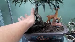 09 bonsai mini, tiểu cảnh mini giá rẻ zalo 0909393078