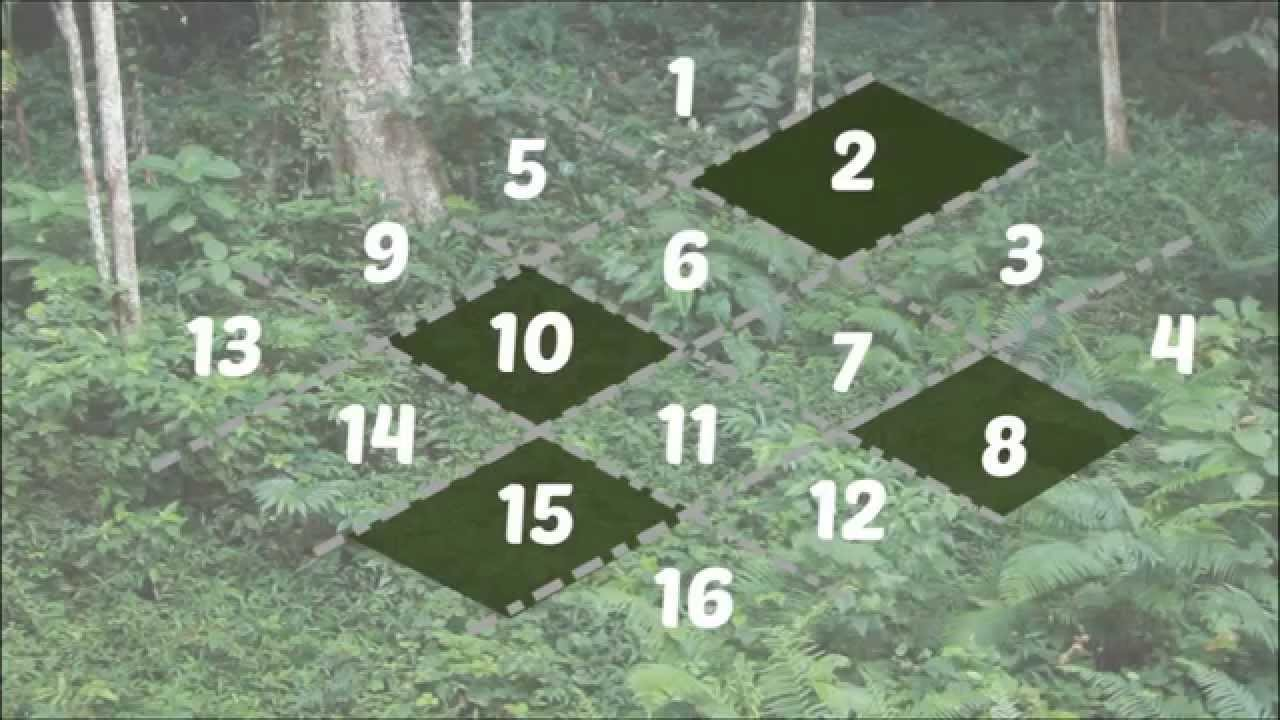 Episode 3 - Plant Sampling Techniques - YouTube