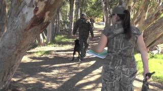 Dog Training Without Equipment On The Dog