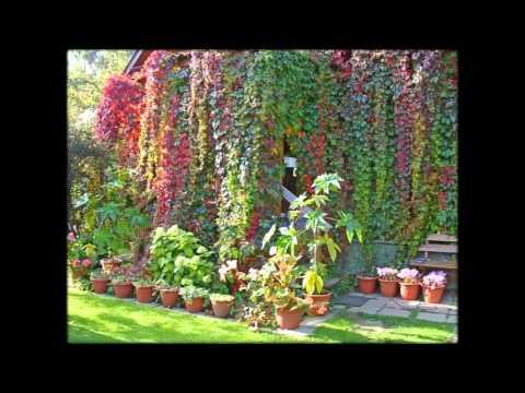 Комнатные растения. Каталог комнатных растений и цветов