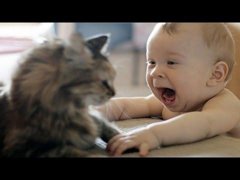 Chats mignons Découverte bébés à la maison pour la première fois