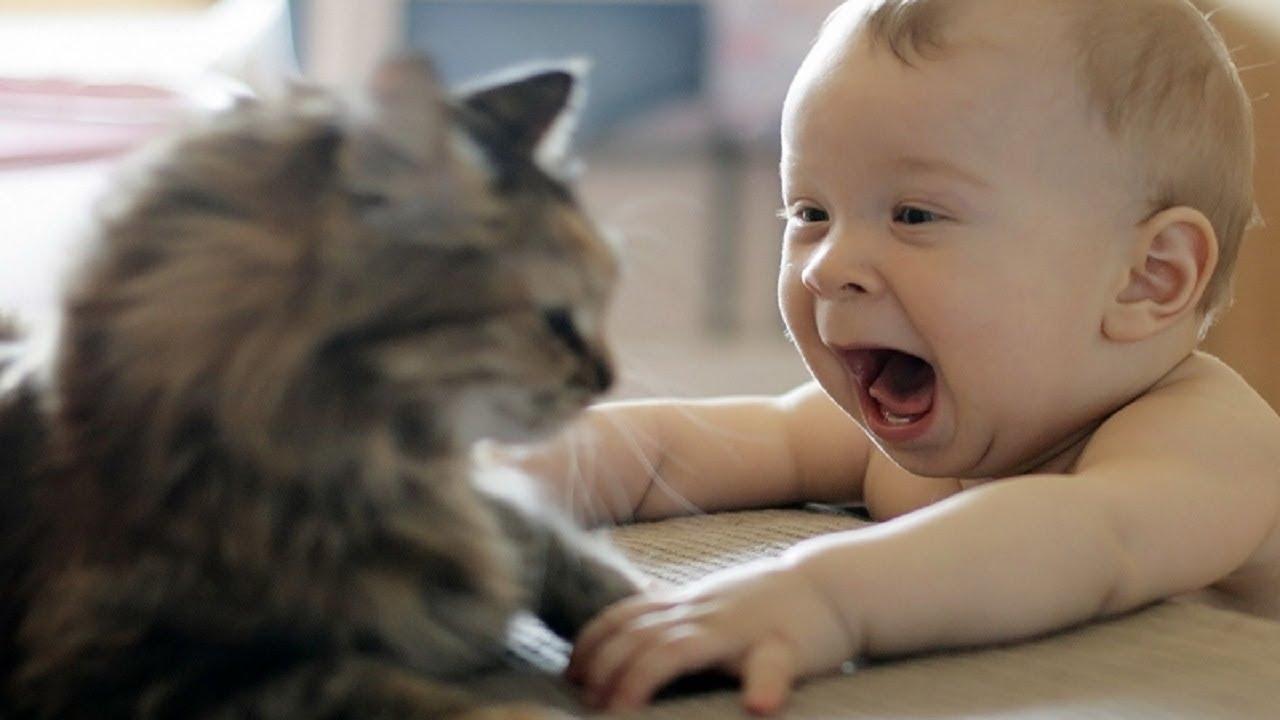 Le chat et l'arrivée d'un bébé