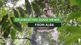 Celebrating Good News From Alba