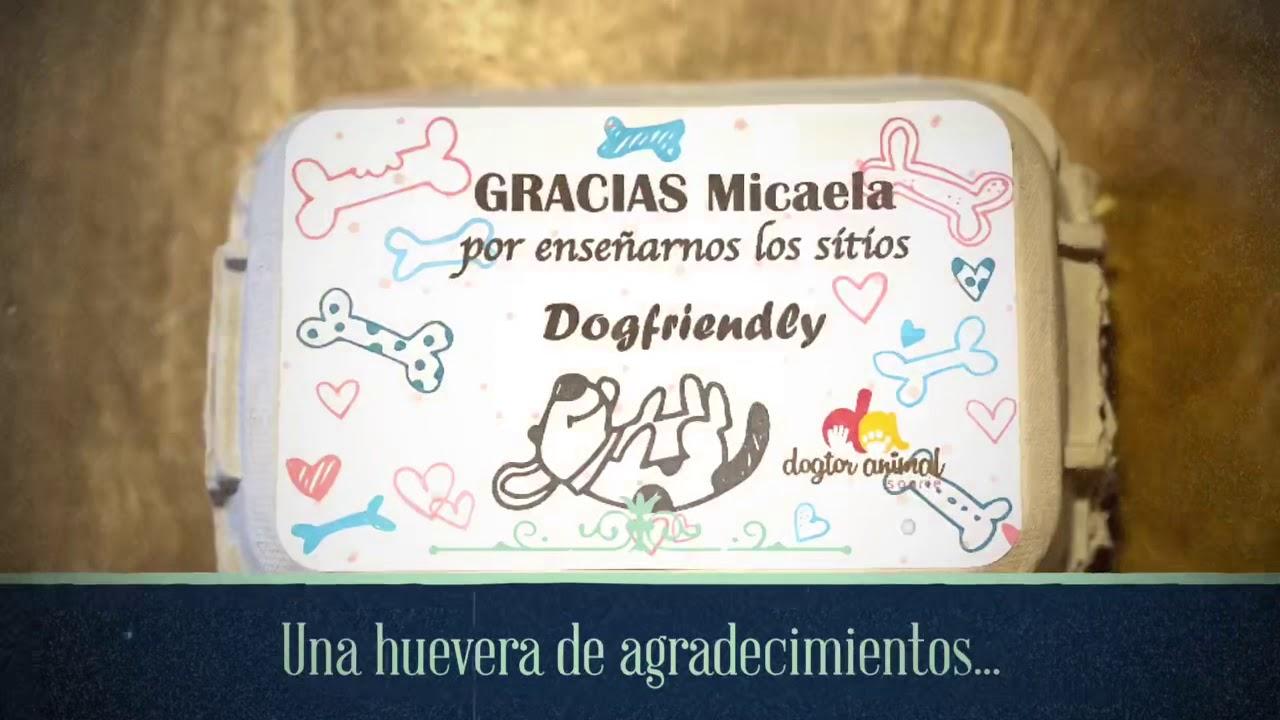 Un regalo solidario es un regalo doble: las hueveras de agradecimientos y  las cajitas de cumpleaños de Dogtor Animal   SrPerro, la guía para animales  urbanos.
