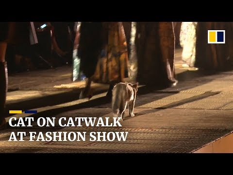 Cat makes an appearance on a fashion catwalk and steals the show