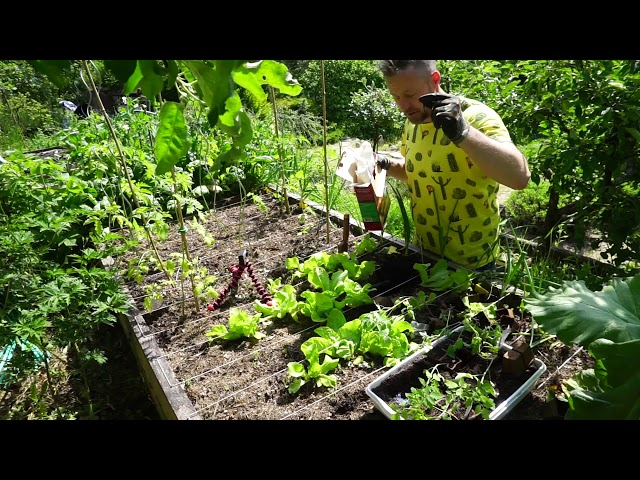 Hobbi zöldségeskert - Viano szervestápok