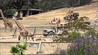 Wild Safari Animal Park in California Wine Country