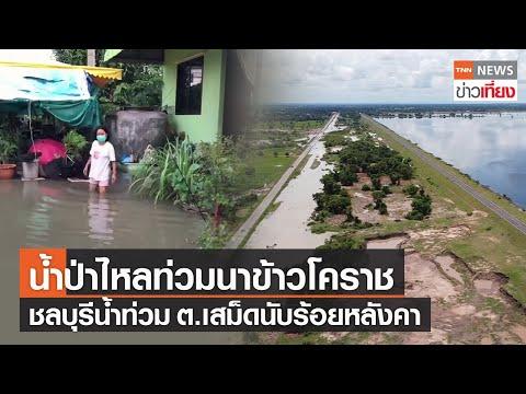 น้ำป่าท่วมนาข้าวเสียหาย100ไร่ที่โคราช - ชลบุรี ต.เสม็ด เดือดร้อน100หลังคา   TNNข่าวเที่ยง   2-9-64