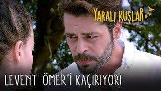 Levent Ömer'i Kaçırıyor! | Yaralı Kuşlar 77. Bölüm (English and Spanish))