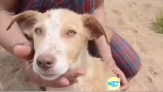 Animal RESCUES -   Amazing people Helping And Rescuing Animals   Compilation 2018