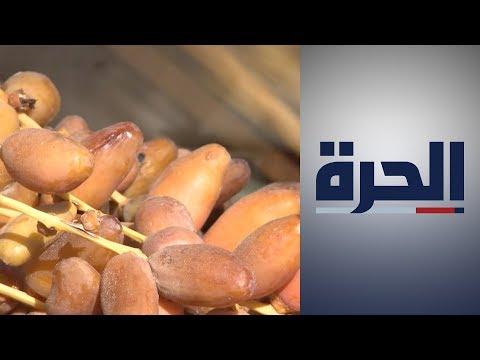 تونس.. الأهالي استرجعوا ملكية أكبر الواحات في مدينة جمنة في أولى تجارب الاقتصاد التضامني  - نشر قبل 6 ساعة