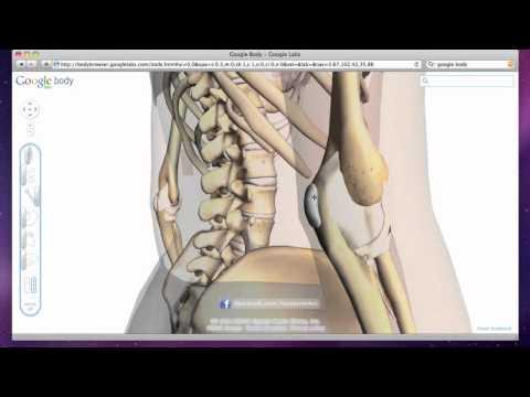 Elbow Bursitis - Olecranon Bursa Swelling and Inflammation