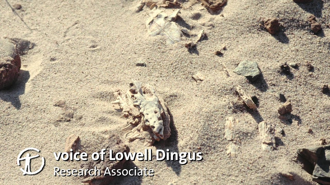 How Are Dinosaur Fossils Discovered and Collected?