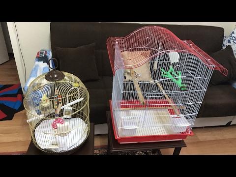 Kuş Için Köşeli Kafesmi Yuvarlak Kafesmi Cafer'e Yeni Kafes Kuş Bakımı