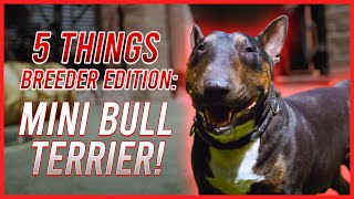 FIVE THINGS YOU SHOULD KNOW BEFORE GETTING A MINI BULL: BREEDER'S EDITION