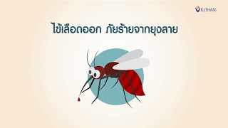 ไข้เลือดออก ภัยร้ายจากยุงลาย l รพ.เวชธานี