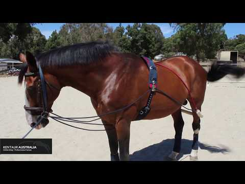 How To Lunge Your Horse With Training Aids