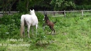Newborn foal - first week of life