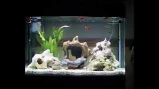 fish rock aqua one 850 aquarium