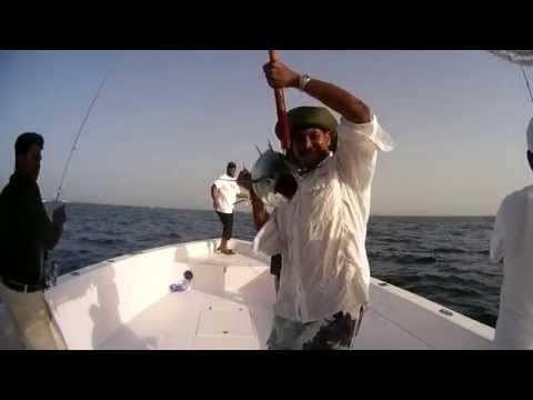 UAE Offshore Fishing - Longtail Tuna