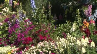 Delphinium, Southern Gardening TV, April 25, 2012