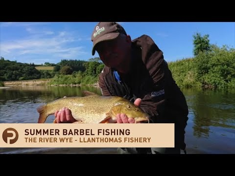 Barbel Fishing - River Wye Fishing - Llanthomas Fishery In Herefordshire