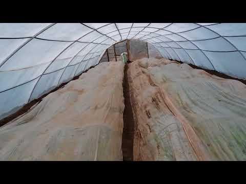Кабачки в теплице... кидаю семина 14 марта