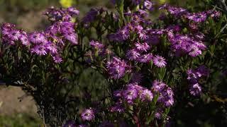 Wild Flowers - West Coast National Park, Western Cape, South Africa