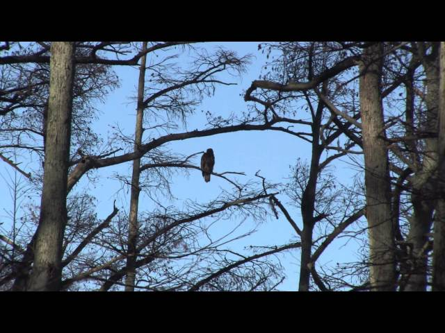 Reelfoot Lake State Park in Tiptonville , Tennessee