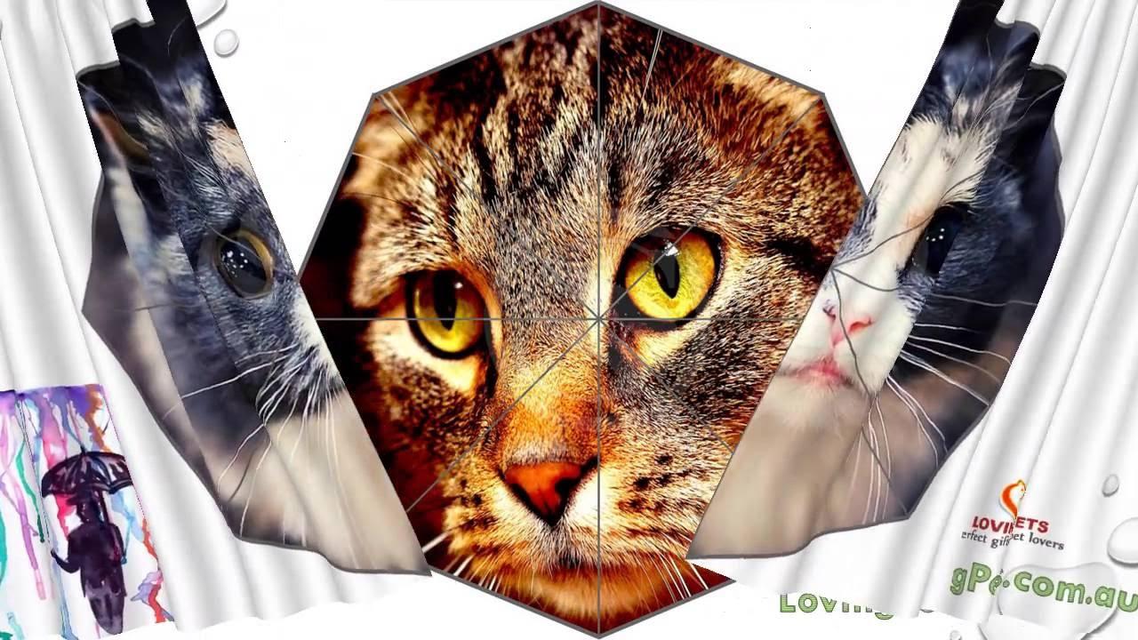 Crazy Cat Lovers Not A Boring Umbrella For You