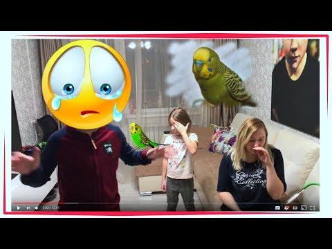Что с моим попугаем ((( ��  волнистый попугай?
